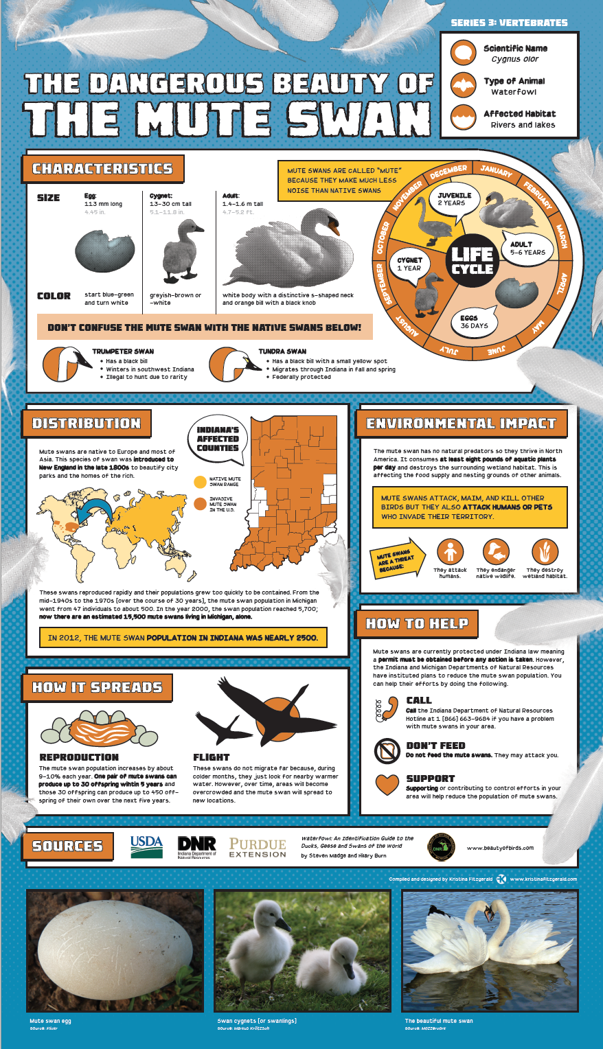 Invasive Species Posters - Mute Swan