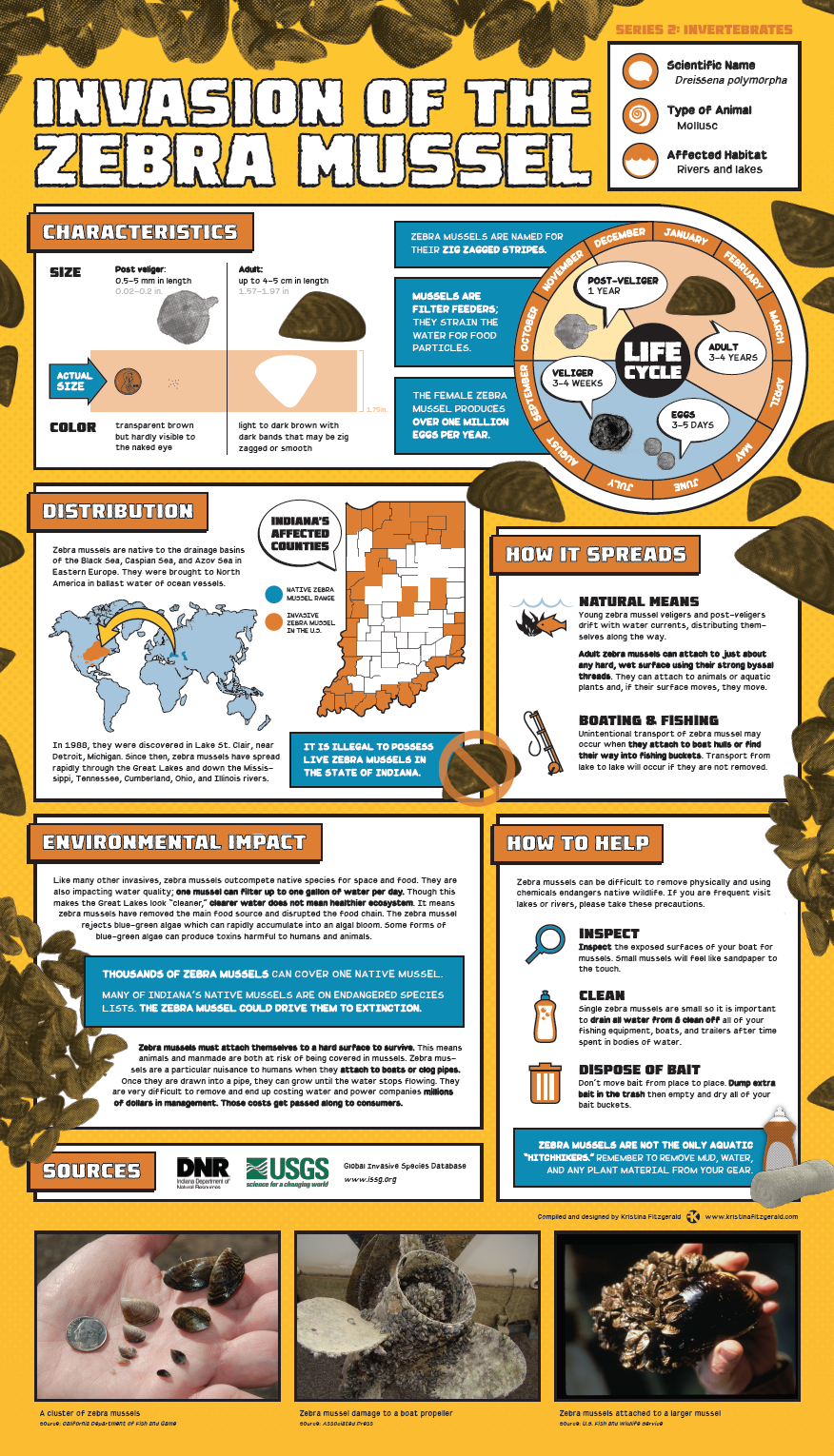 Invasive Species Posters - Zebra Mussels