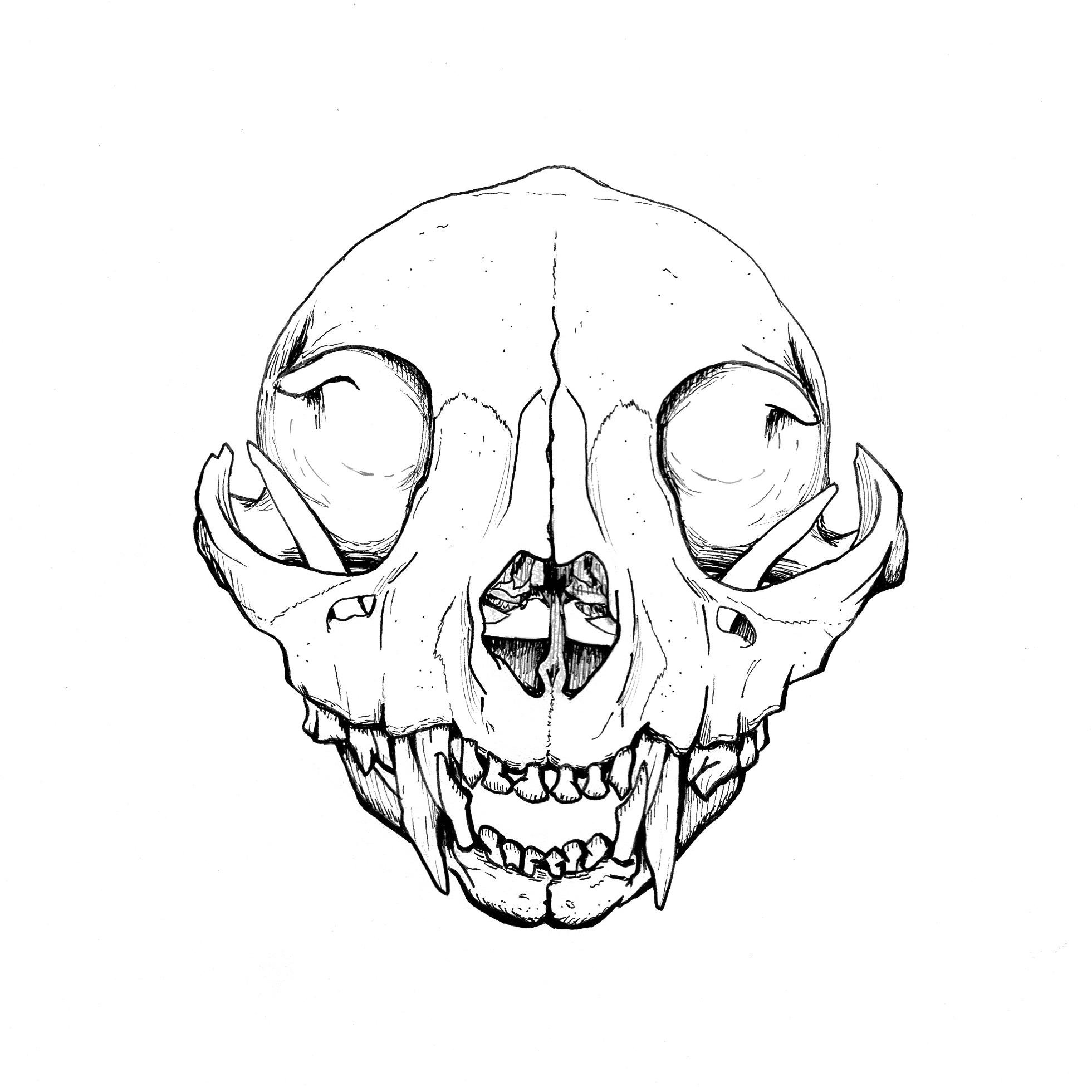 Skulls-Skeletons.jpg