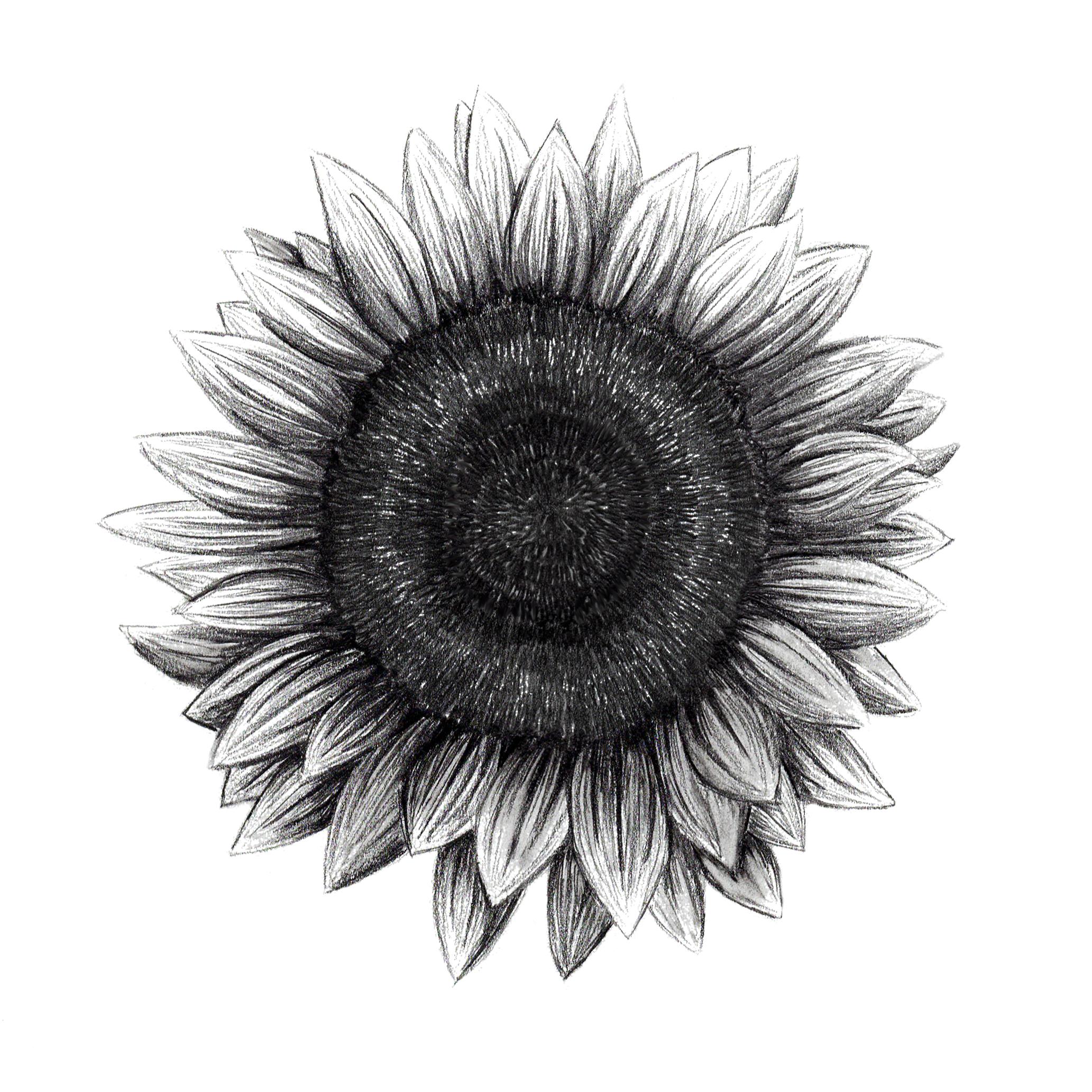 Sunflower_living.jpg