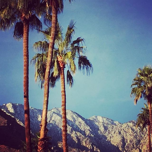Amazing to see all the #snow in the mountains in #palmsprings !  #views #palmtrees #realestate #relaxing #desert #sun #home