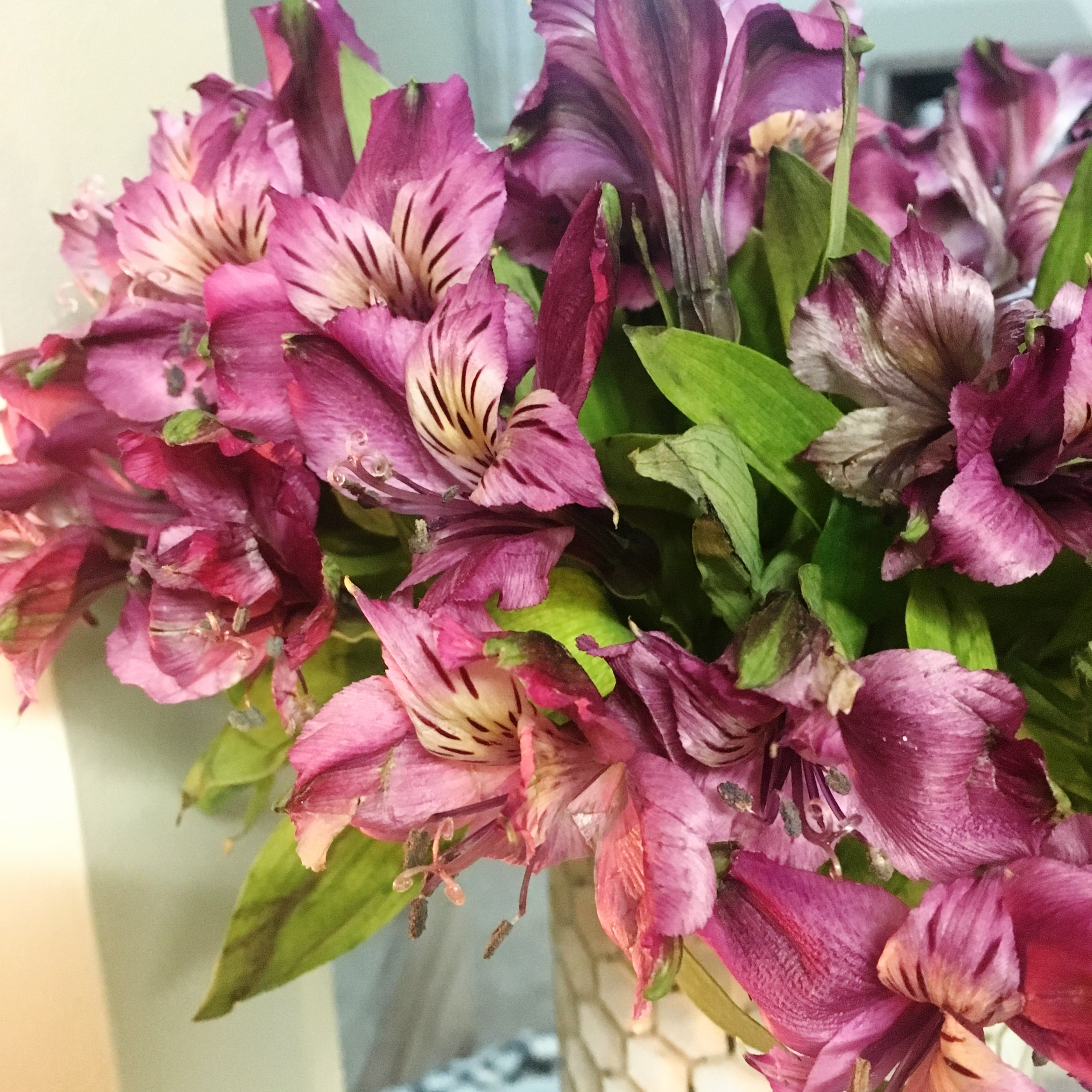 These fresh cut alstroemeria flowers are still going strong after 3 weeks!