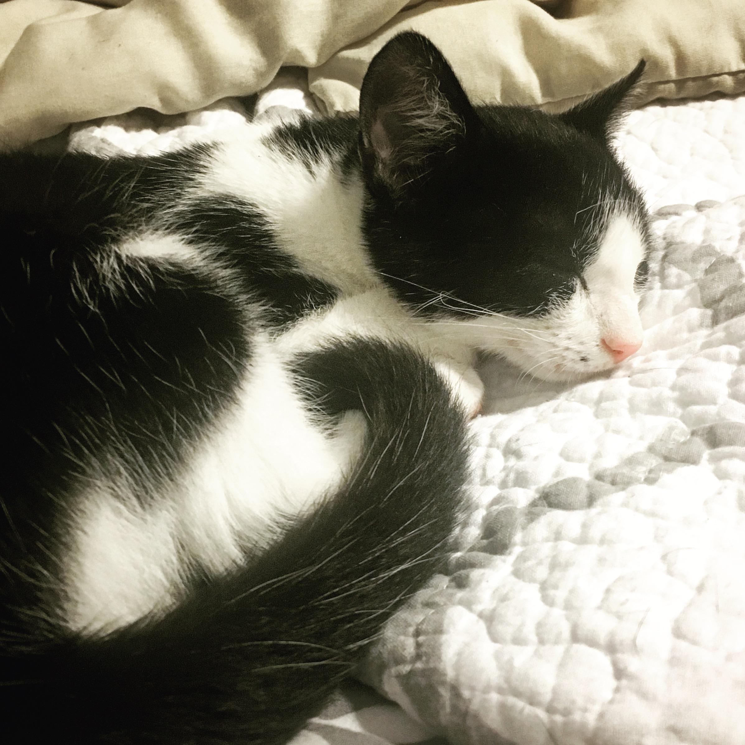 Soft kitty, warm kitty, little ball of fur......