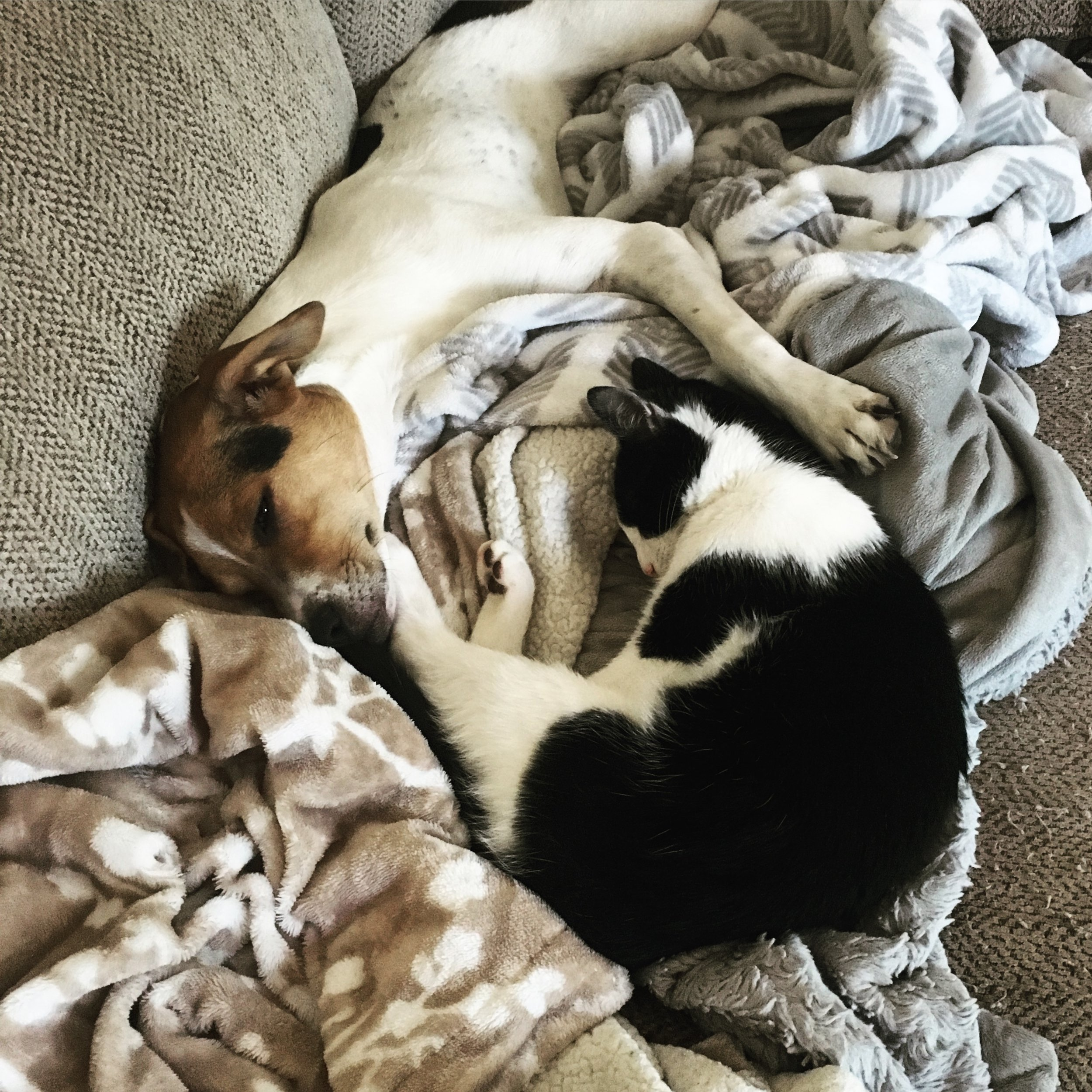 My newest pup,Molly, adopted in June 2017 [adopt, don't shop!]. And my baby cat, Augustus [Gus for short], moved in August 2017 [hence the name!]. They love to cuddle and play!