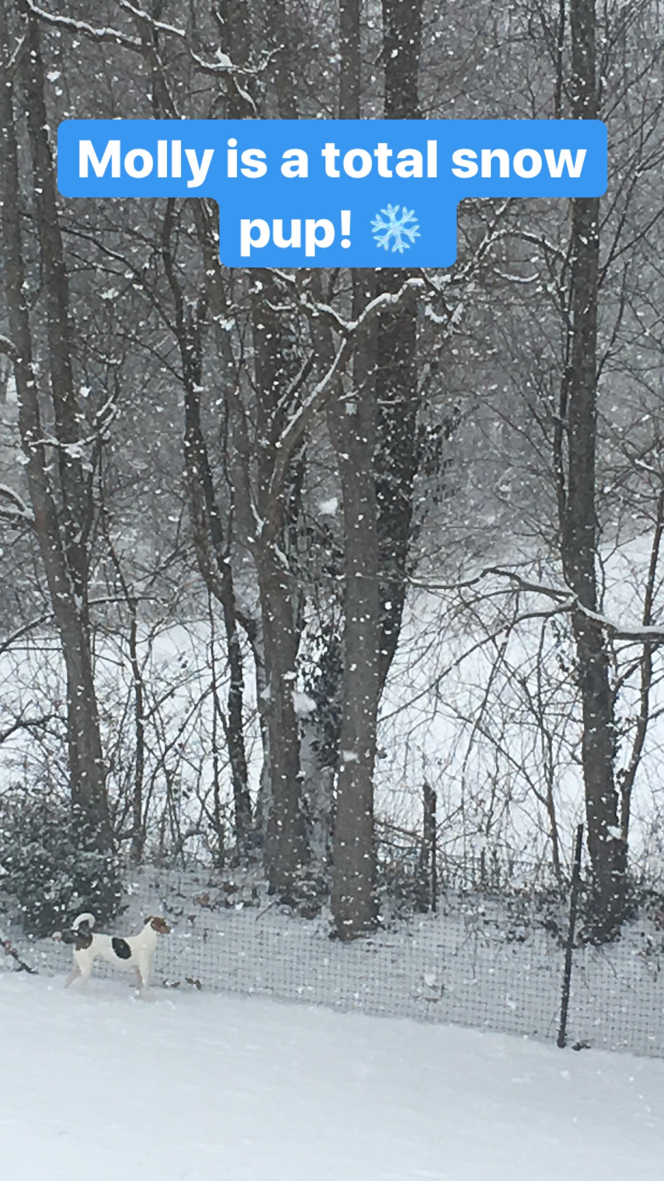 Pretty Molly in the pretty snow