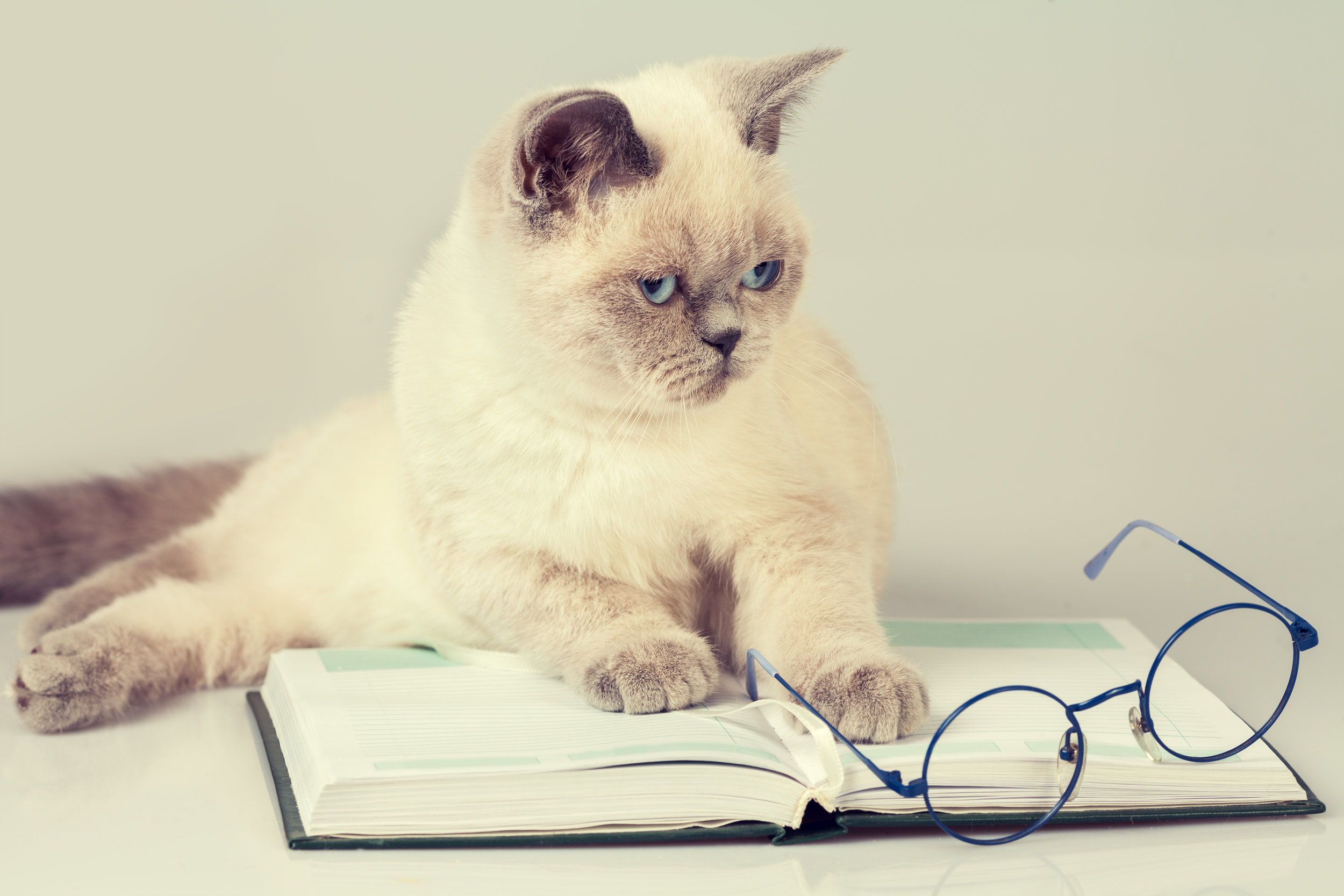 Even your cat has books.