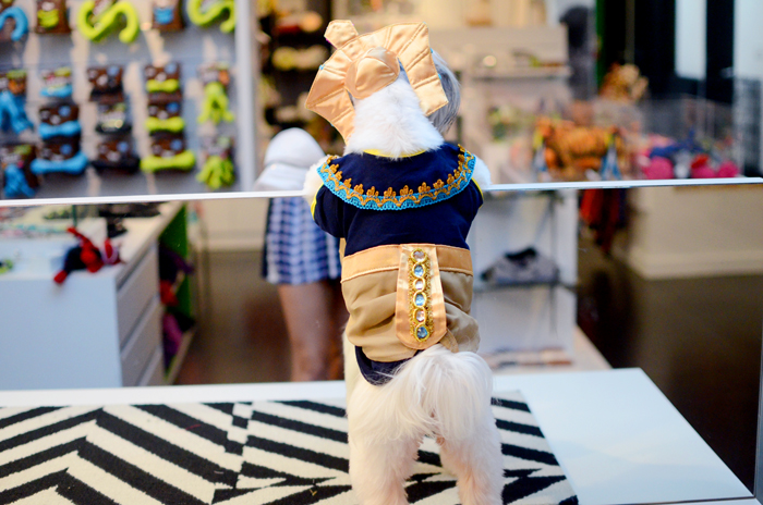 pharaoh dog costume
