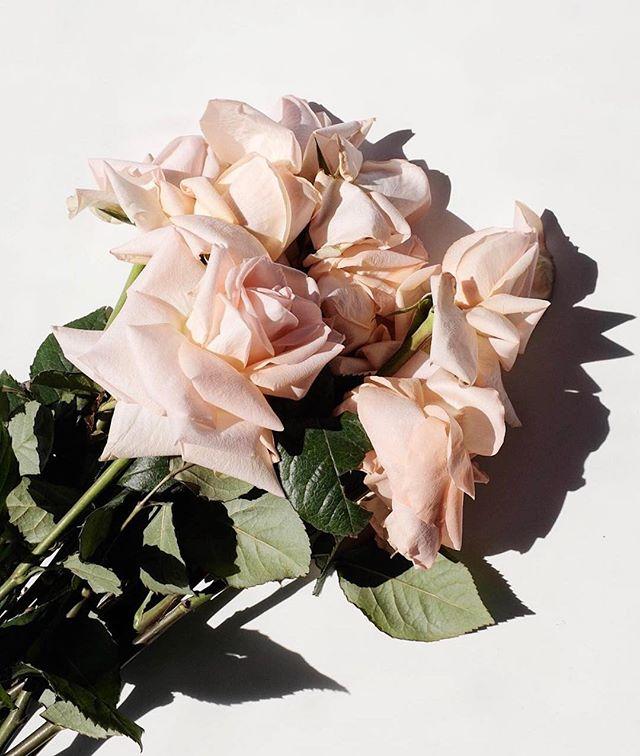 Roses, always | image: @jasminedowling