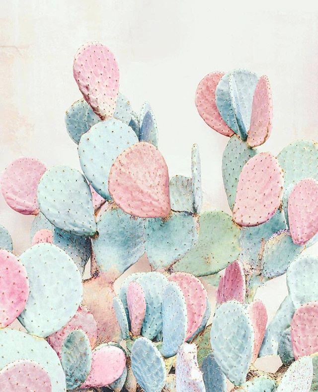 Pastels forever via @nicholasscarpinato