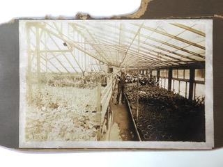 Old Greenhouse Interior.jpeg