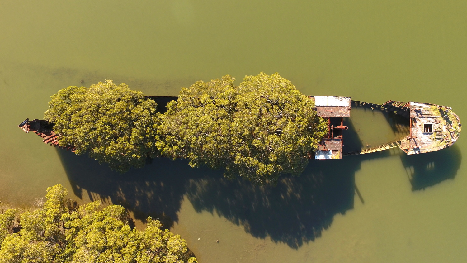 The SS Ayrfield, an abandoned collier, Homebush Bay, Sydney Harbour