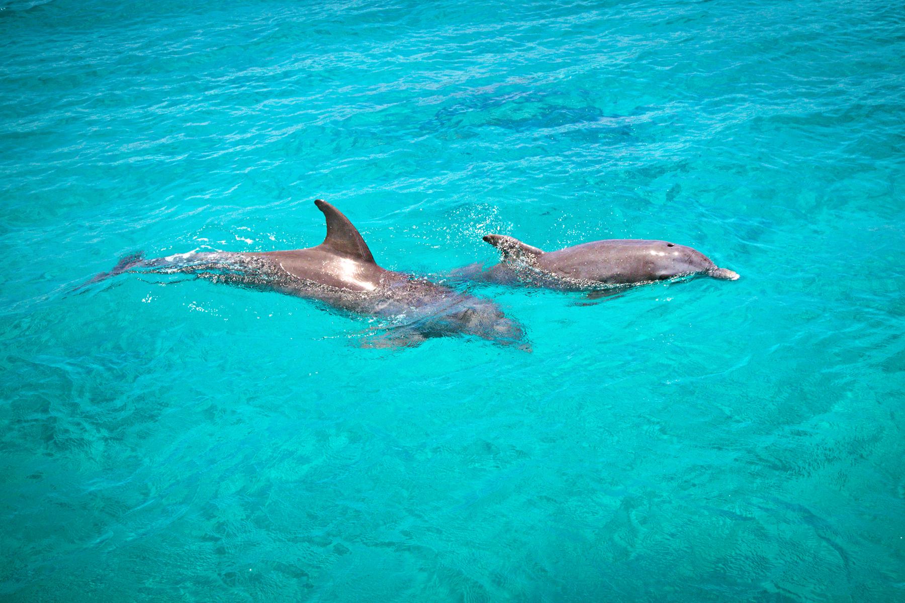 Dolphins-Swim.jpg