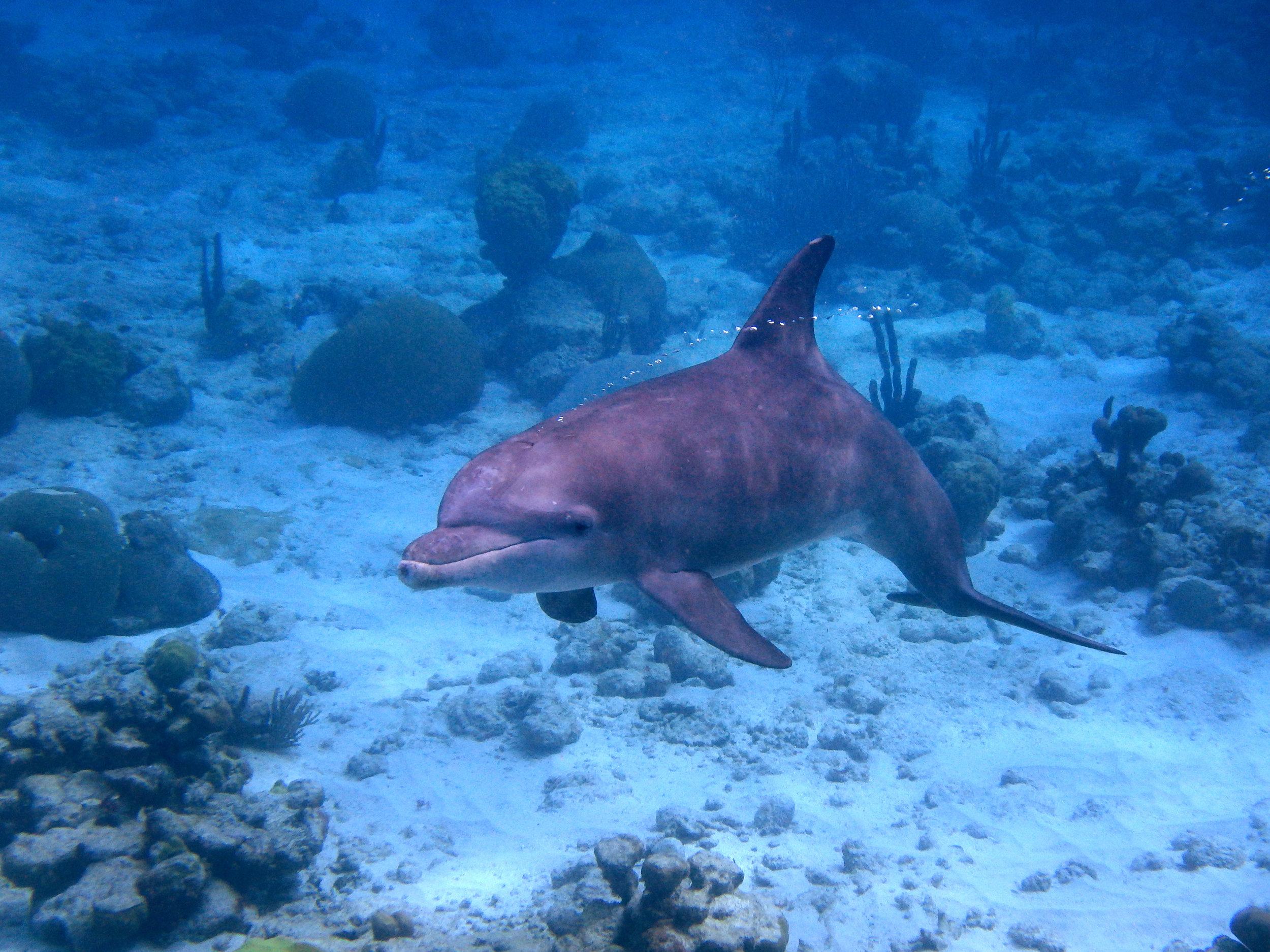 Dolphin-Bubbles.jpg