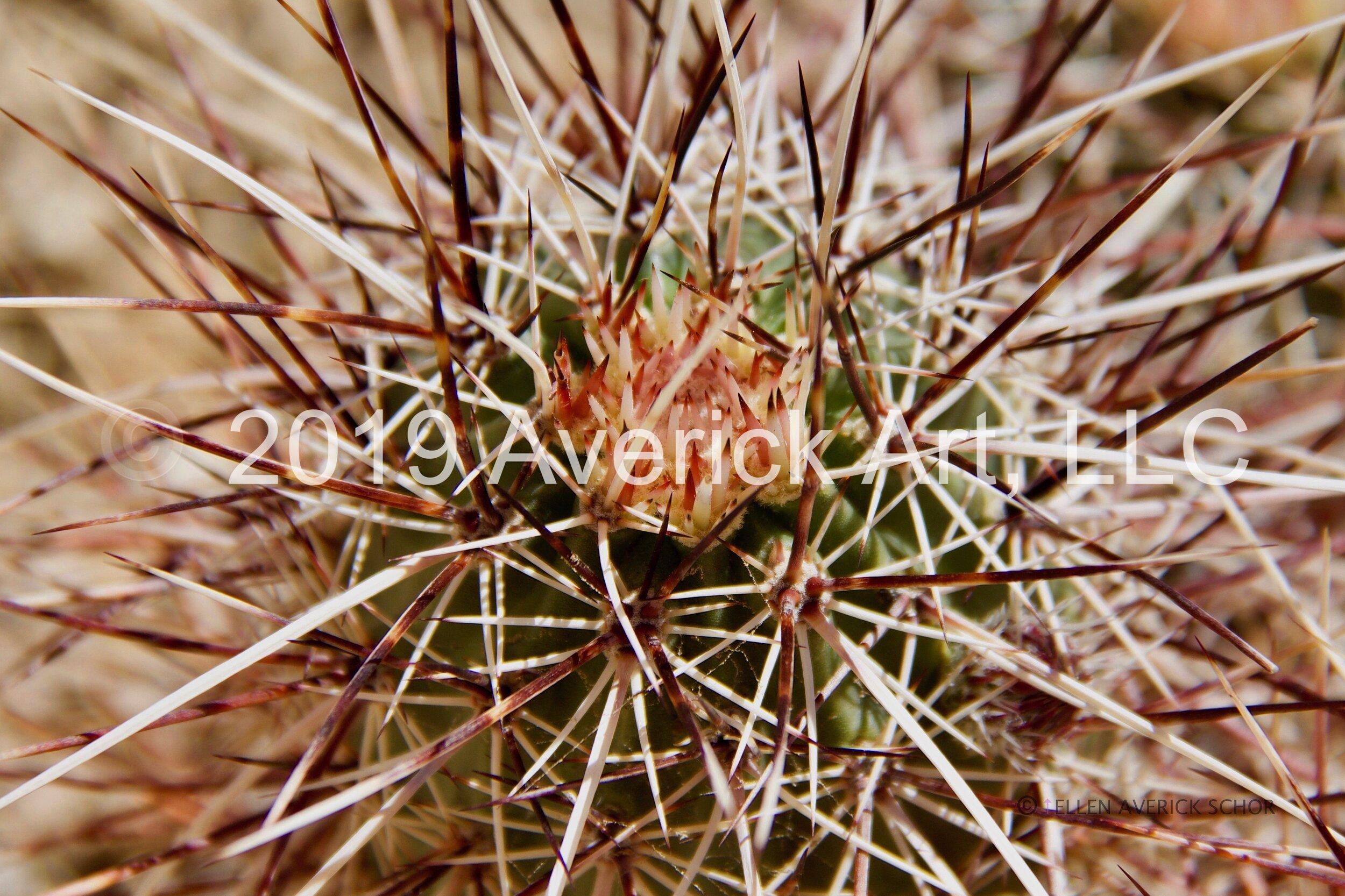 Desert - 7.jpg