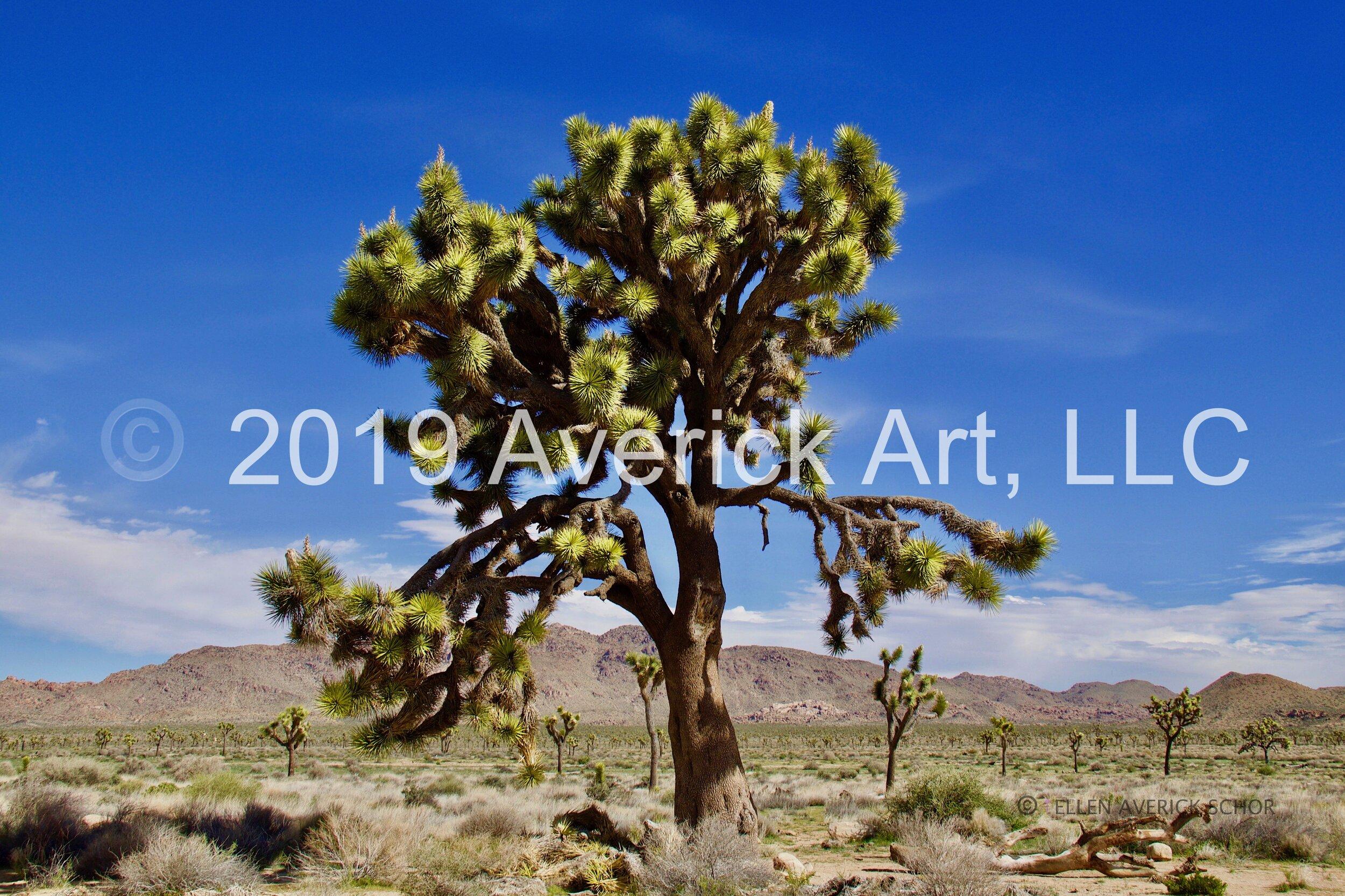 Desert - 5.jpg