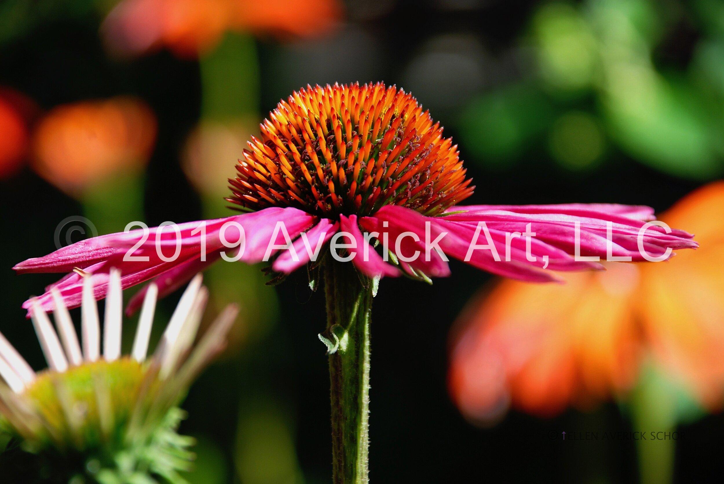 Garden - 1.jpg