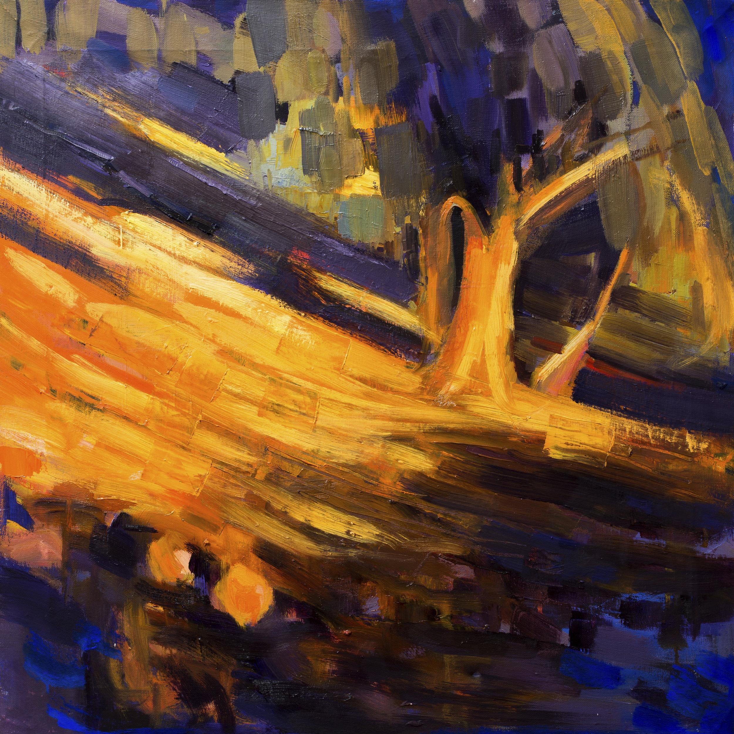 """Olive grove behind Casa Edmundo"""