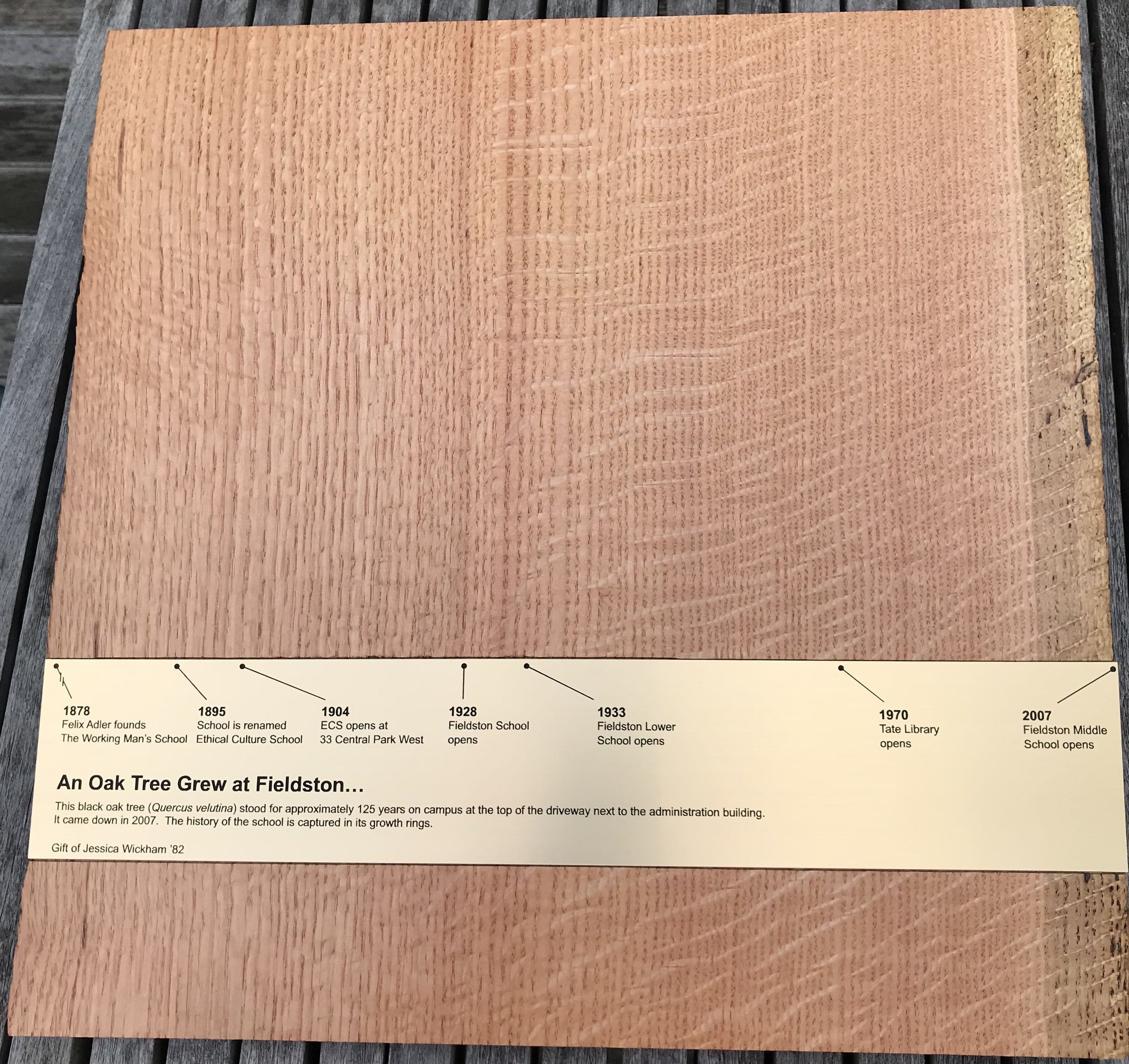 wickham-ecfs-oak-tree.JPG