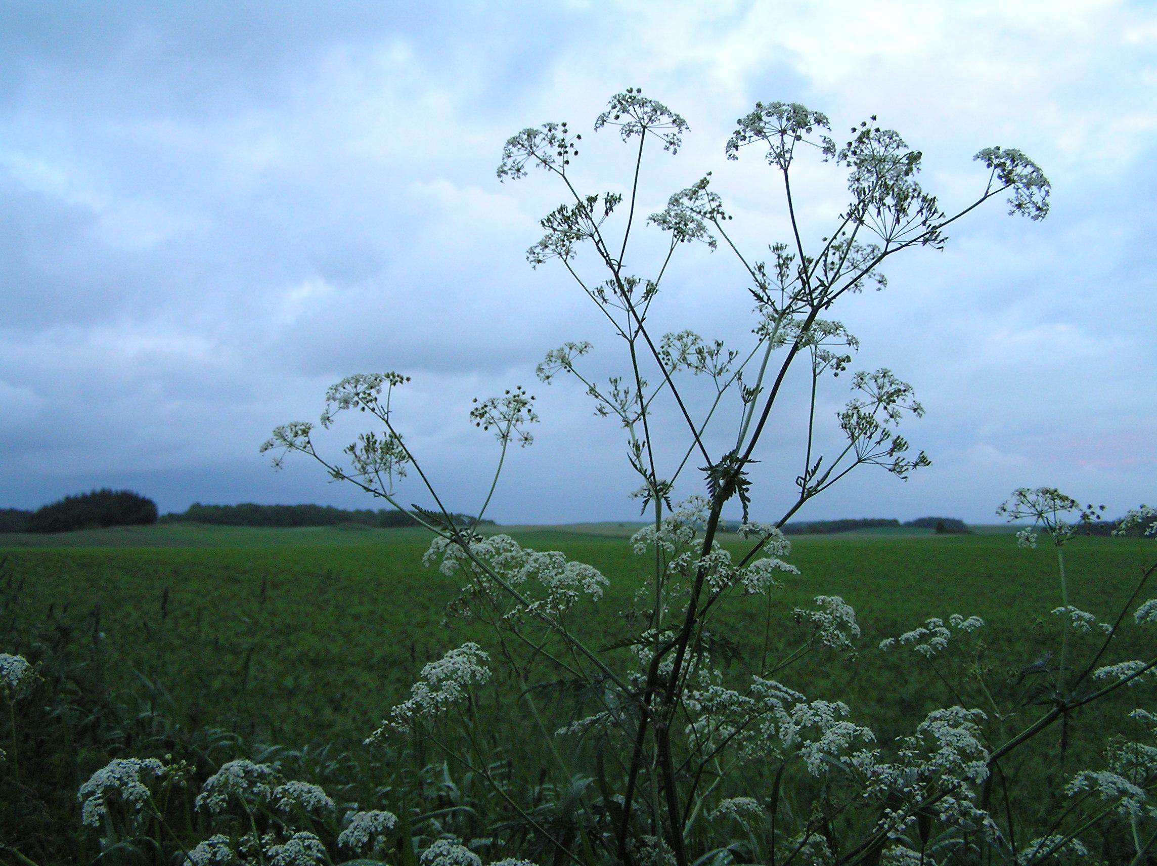"""Bæredygtighed er grundlæggende for alt hvad vi gør…. - Restauranten er grøntsagsbaseret, og ingredienserne er baseret på vores permakulturhave, den vilde natur, og små lokale producenter. Selvfølgelig (!) er der ikke anvendt pesticider og lignende, og vi undgår F1-hybrider, hvorved der kun er frøægte planter i vores have. Vi støtter økologisk og biodynamisk dyrkning i meget høj grad, men vi ønsker at gå meget længere. Vi ønsker at ændre ambitionen – i stedet for blot at være tilfreds med et minimalt negativt aftryk på naturen, ønsker vi at tilstræbe et """"positivt aftryk"""" f.eks. ved at øge biodiversitet i forbindelse med dyrkning. Vi elsker at eksperimentere med hvad vi faktisk selv kan dyrke – ved at reintroducere gamle sorter, at kultivere vilde planter man normalt ikke vil dyrke i en have, og ved at introducere nye planter, der normalt ikke hører hjemme i Danmark.I køkkenet vil vi gerne vise naturens fulde gastronomiske potentiale. Vi er meget orienteret mod sæsonen og det momentane – og vi ønsker samtidig at """"forlænge"""" sæsoner ved at preservere naturens overflod når den er der. På denne måde er maden – såvel som atmosfæren generelt – forskellig efter sæsonen og vejret, men lige interessant og eksperimenterende året rundt. Vi køber enkelte ting, vi ikke selv kan dyrke – f.eks. appelsiner fra Italien når de er i sæson, mens de ting vi kan dyrke – f.eks. æbler – aldrig importeres.Bygningen, hvori vi bor, er en demonstrationsbygning for forskellige bæredygtige teknologier – f.eks. er væggene halmelementer (i stedet for f.eks. betonelementer), spildevand genbruges i et hygiejnisk dyrkningssystem, en røgvasker fjerne skadelige partikler fra masseovnen – og adskillige andre innovative løsninger.Alle interiørets elementer er baseret på samme ideologi – f.eks. er stolene dansk design, produceret af lokalt træ, og tallerkenserien er skabt til os uden glasering, så de kan komposteres – blot for at nævne enkelte eksempler.Vores vine er naturvine – produceret med økologisk ell"""