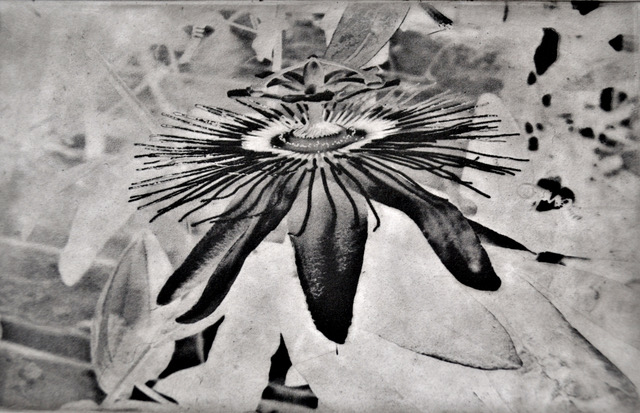 Still, Some Passion   Photopolymer