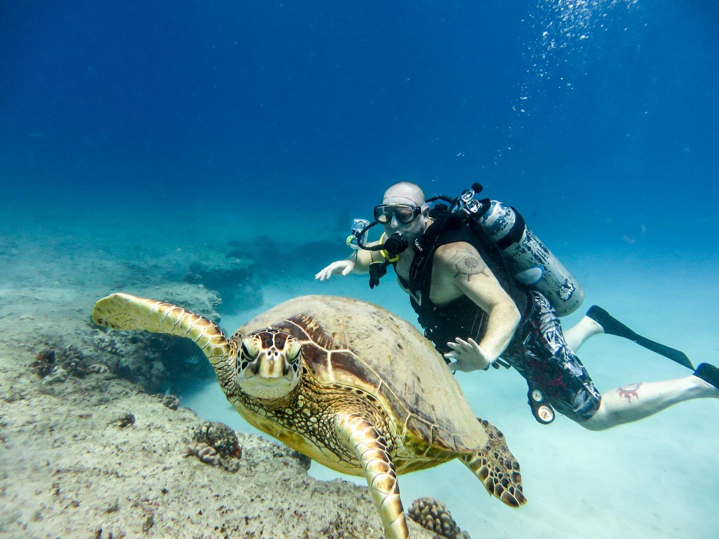 scuba diver photographer with turtle oahu hawaii