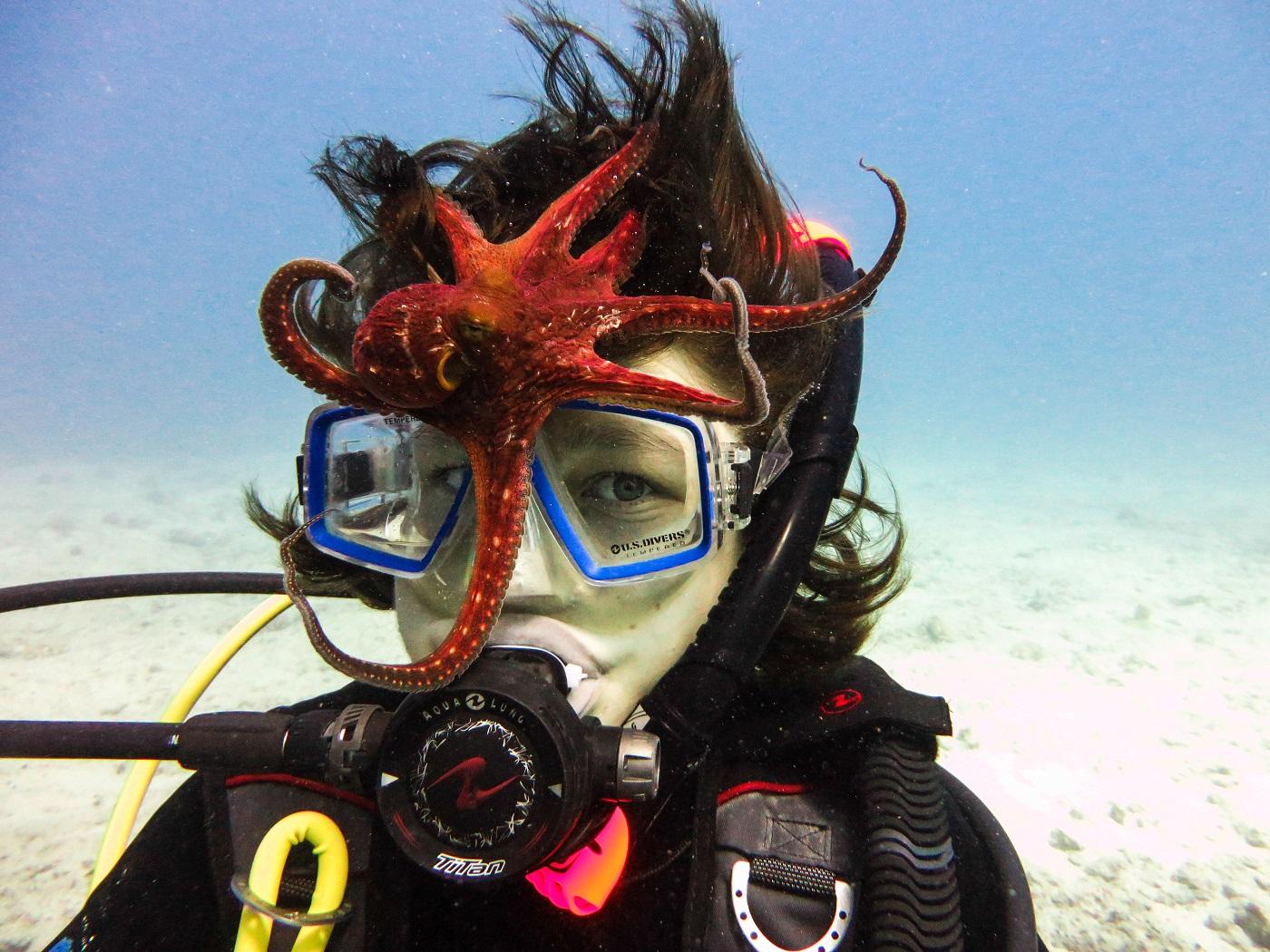 underwater photographer oahu