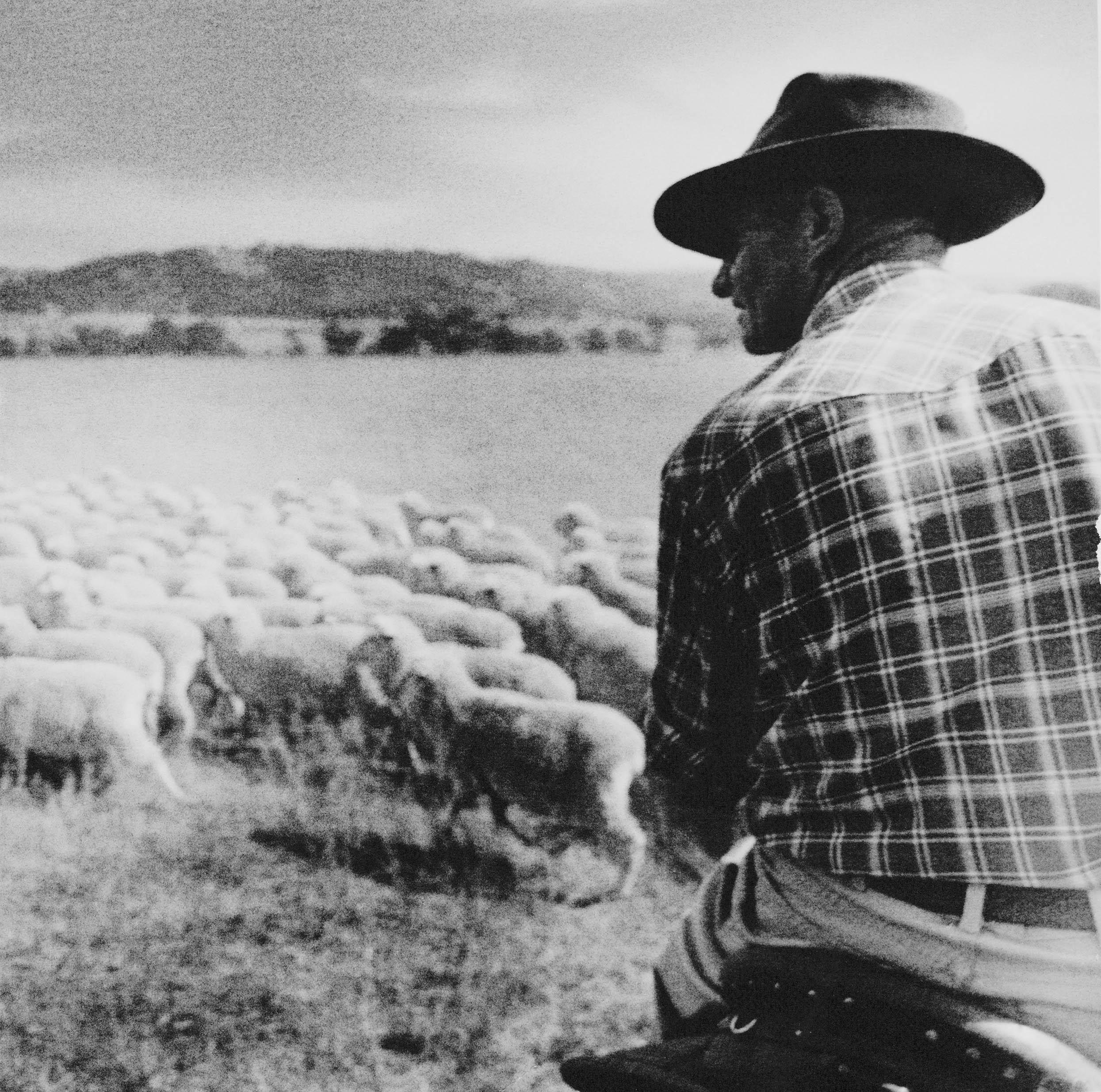 Shepherd.BW.SLR.WEB.jpg