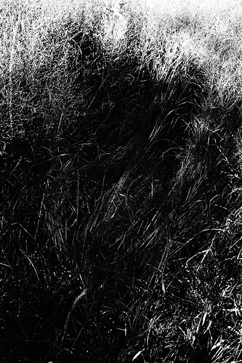 03_Nico_Malvaldi_143_54.jpg