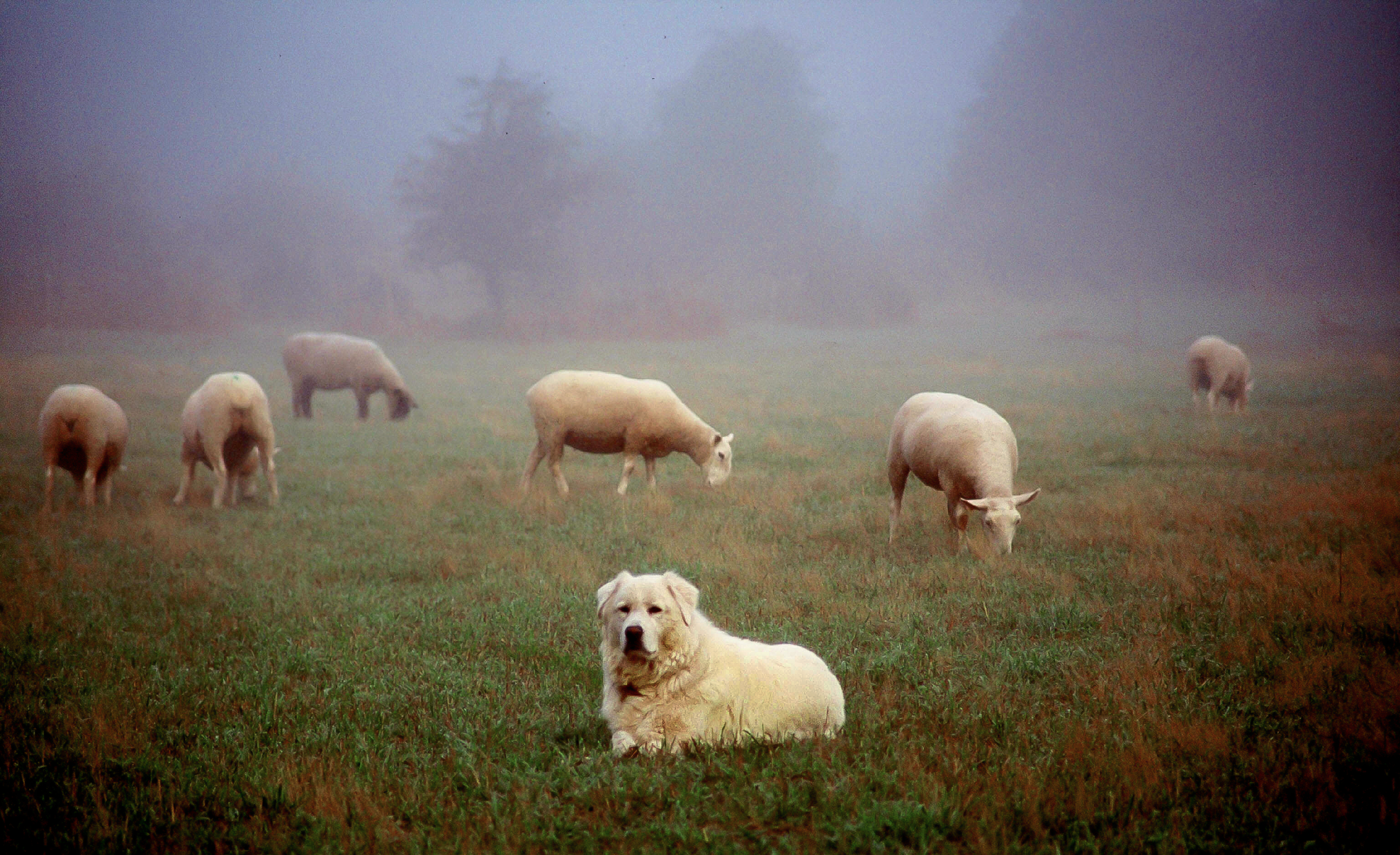 Guardian-of-the-Flock.png