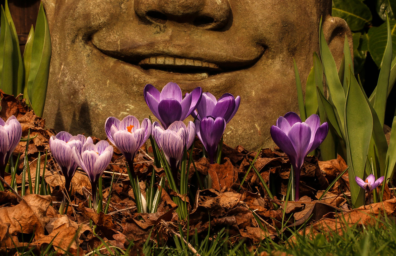BUDDHA'S SMILE     ORDER