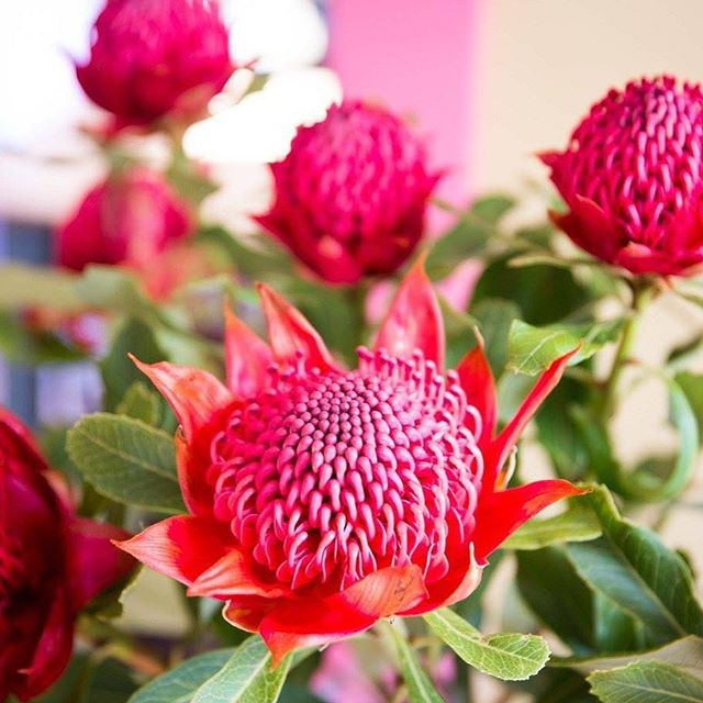 More beautiful flowers in the cafe #flowers #flowerstagram #cafe ⠀ #nz #newzealand #greytown #greytownvillage #wairarapa