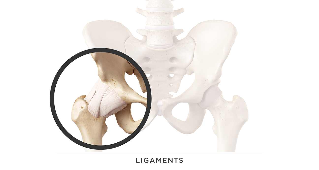 LIGAMENT.png