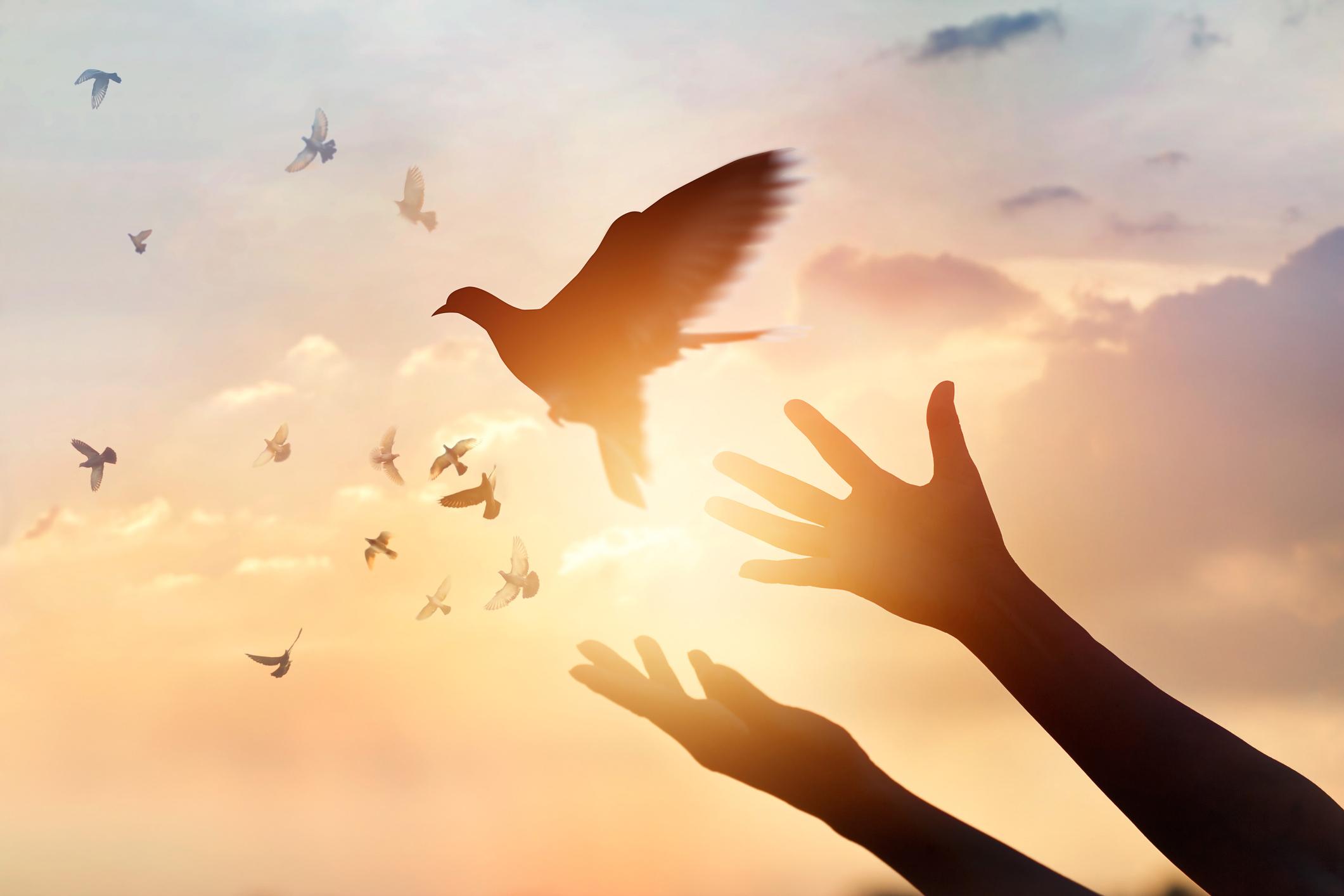 stacie-ivey-healing-widl-free