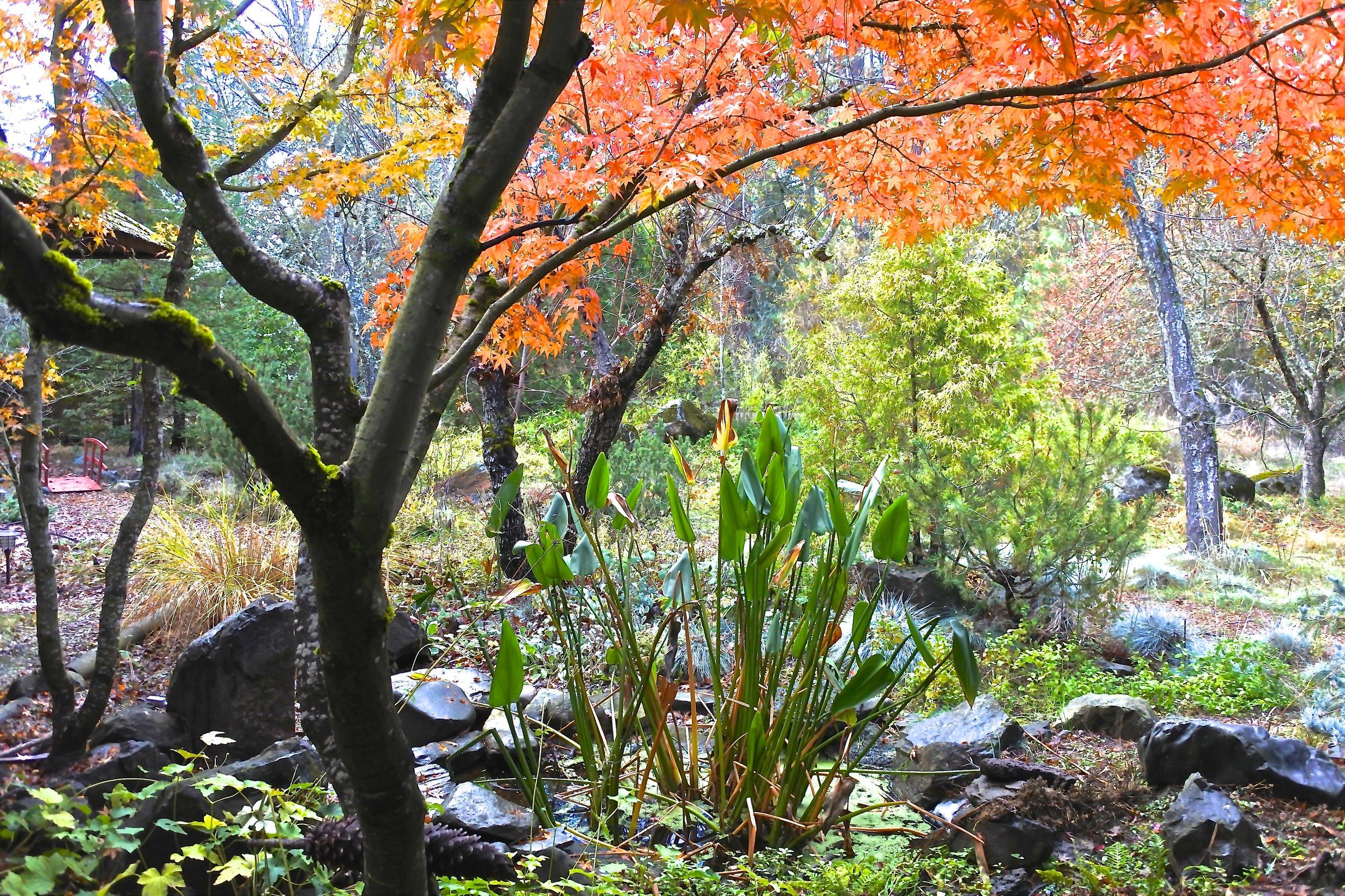 Front Garden View / Jade Valley