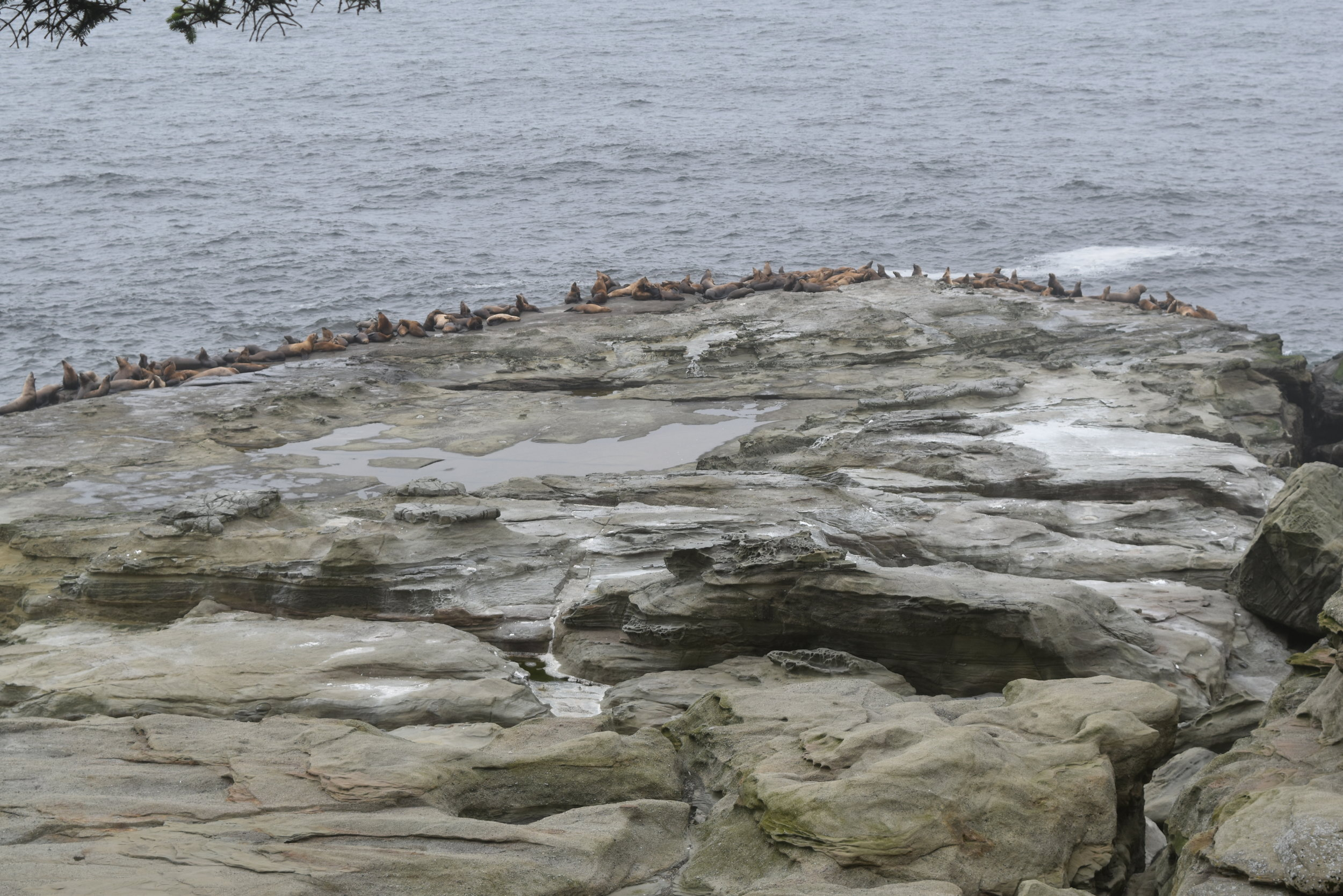 Look closely, they are sea lions!!!