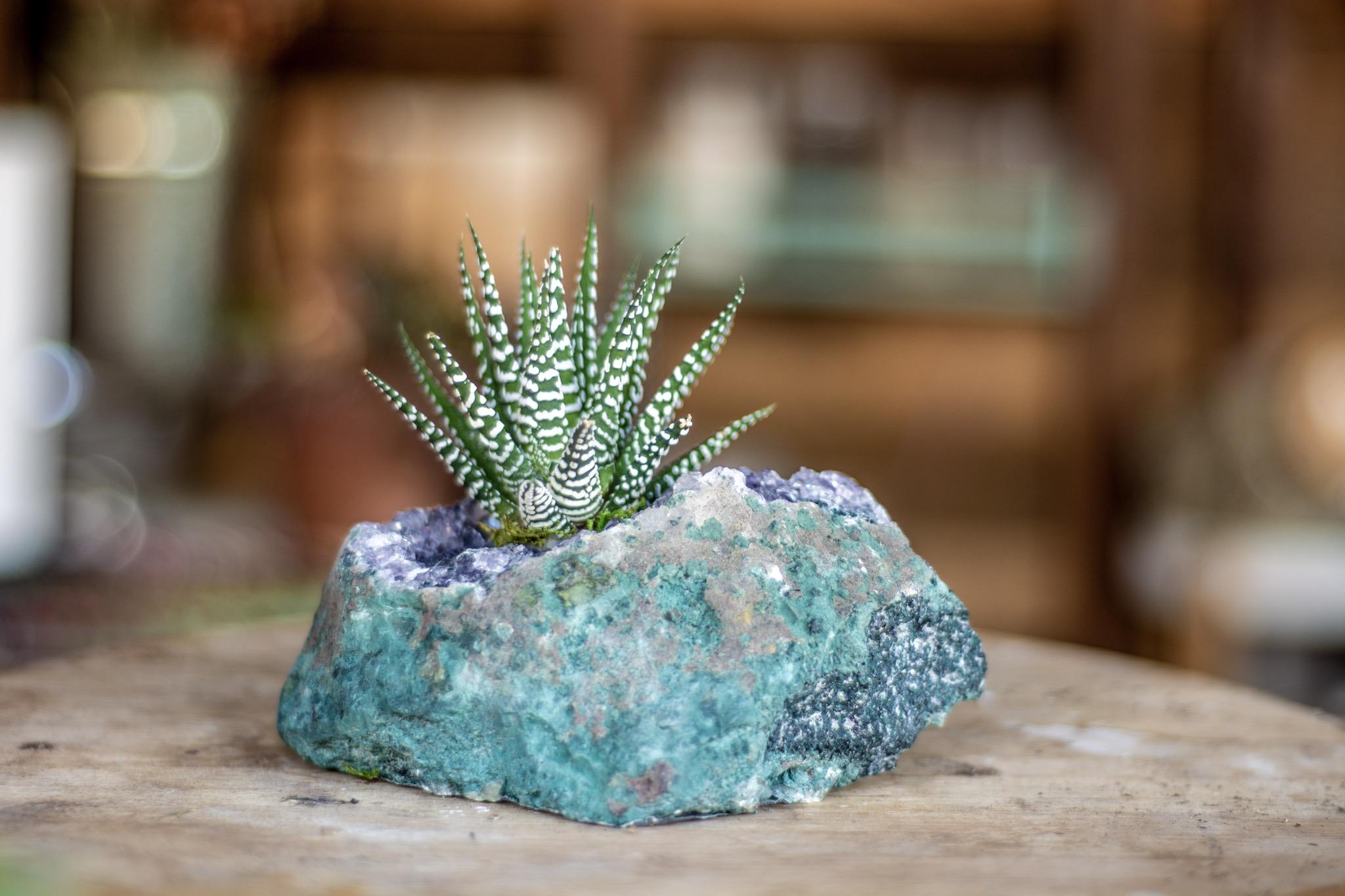 infinitesucculent_crystals_ccbiz_gabaccia__GAB5861.jpg