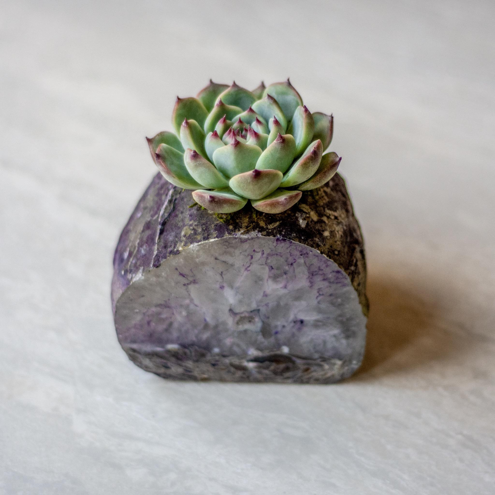 infinitesucculent_crystals_ccbiz_gabaccia__GAB5868.jpg