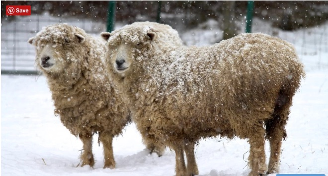 Winter at a Wing and a Prayer Farm - photo from their website
