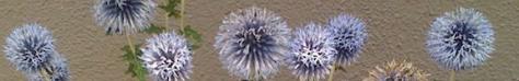 bluebuttons.jpg