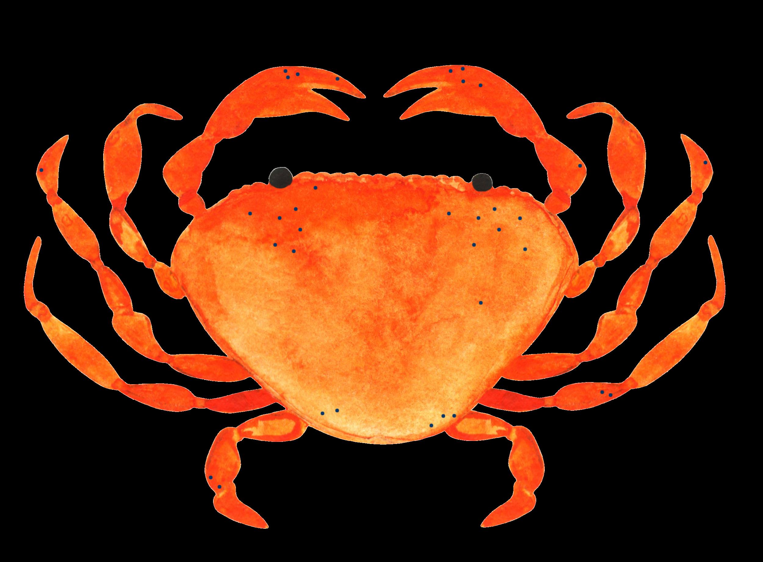 freckled-crab.png