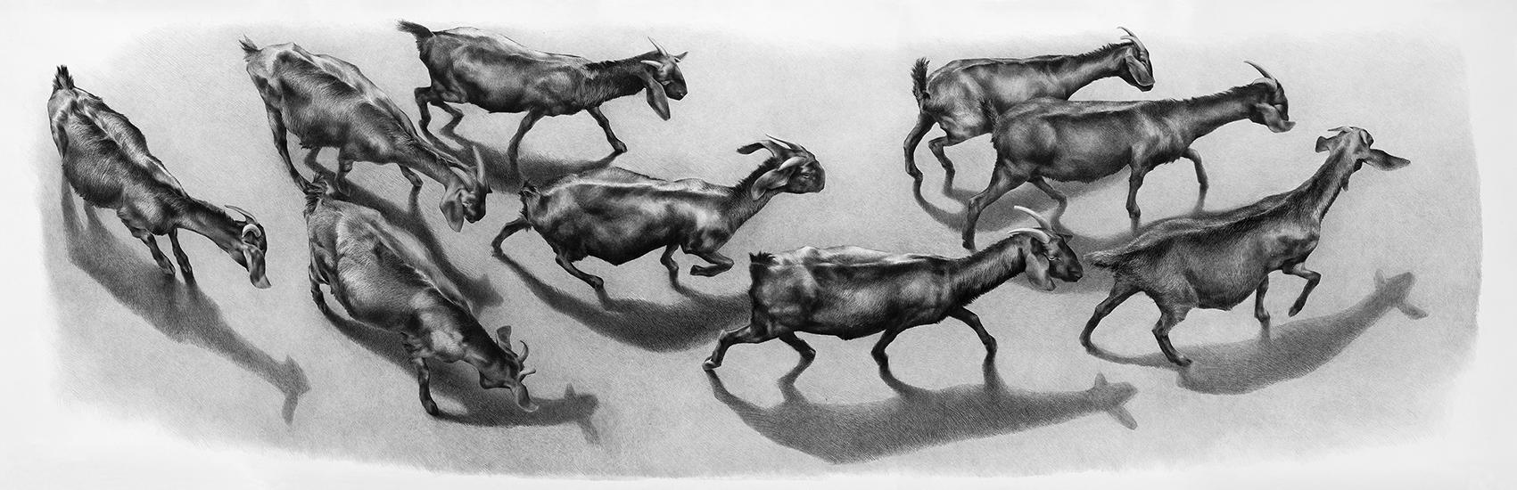 """""""capre del Vesuvio"""" 2013  H 125 cm x 420 cm , disegno a matita su carta"""