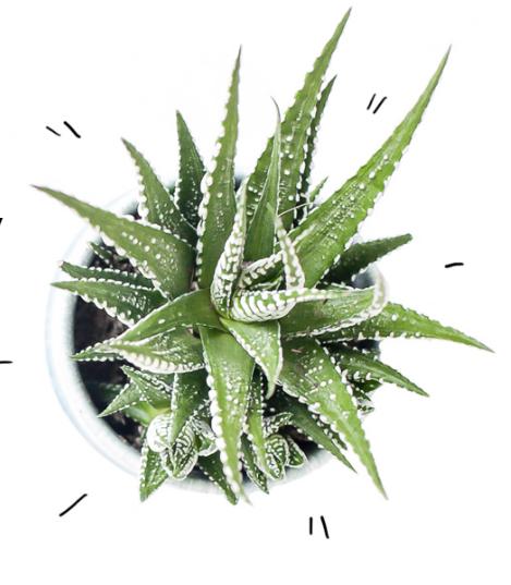 Secrets of Green cactus.png