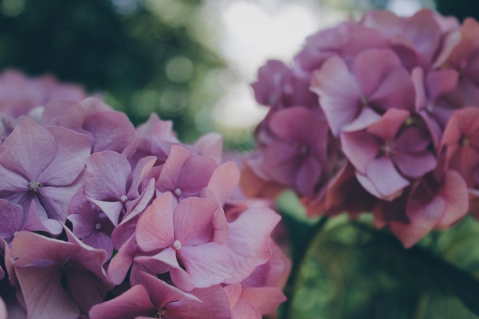 Blooms by Veri Ivanova on Unsplash