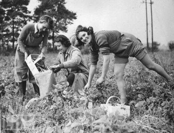 land girls 4.jpg