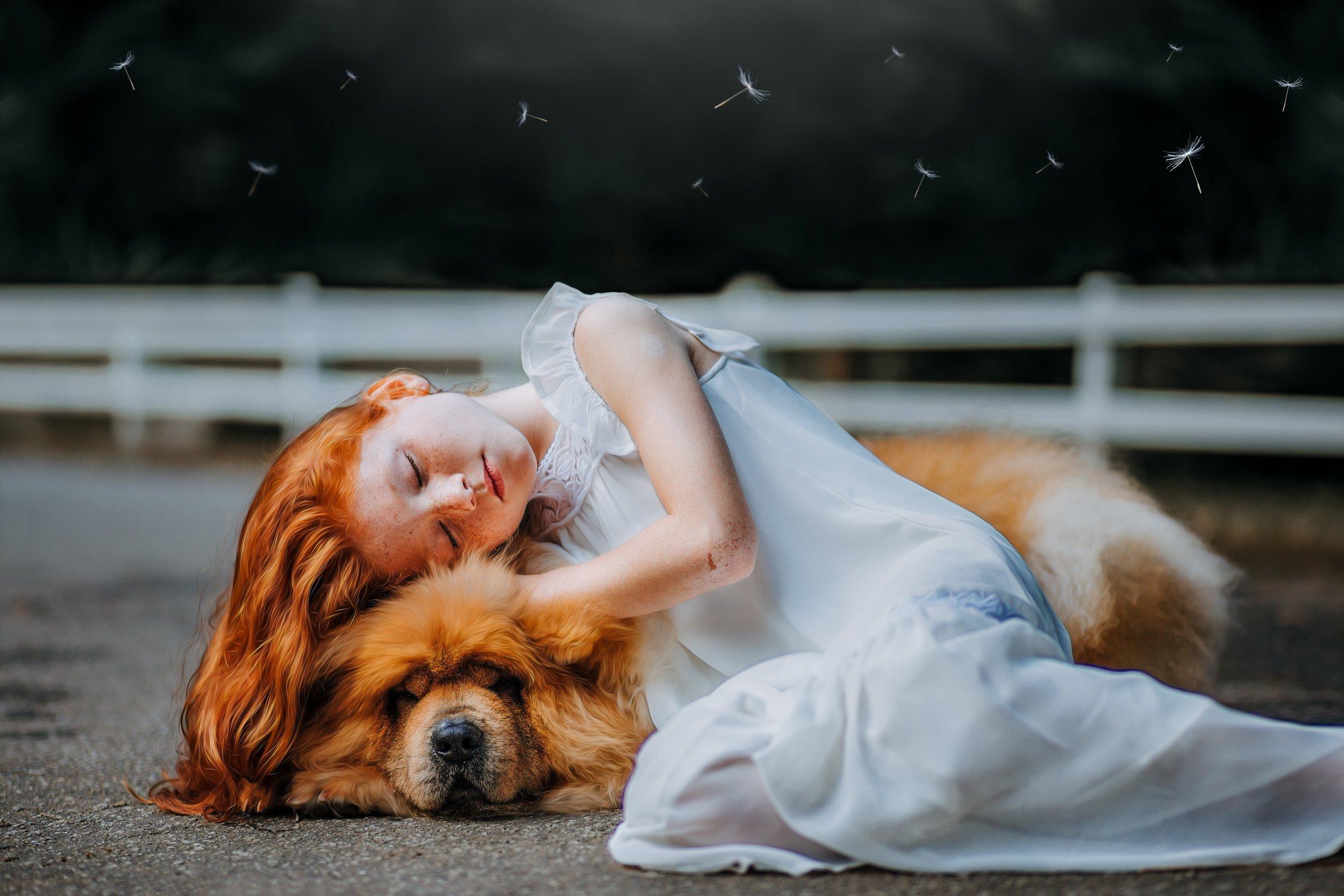 adorable-animal-beautiful-573258.jpg