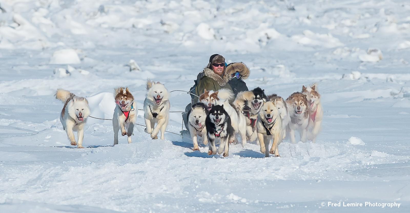 Dog team 4
