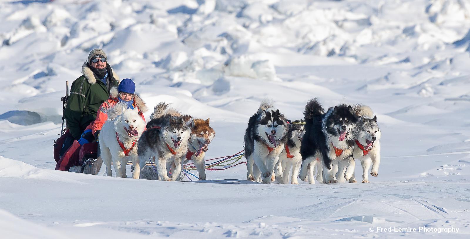 Dog team 6