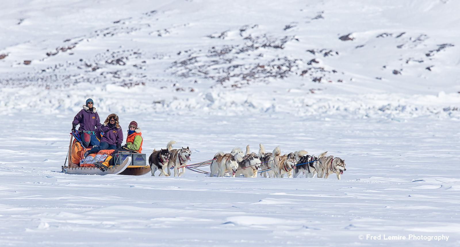 Dog team 8