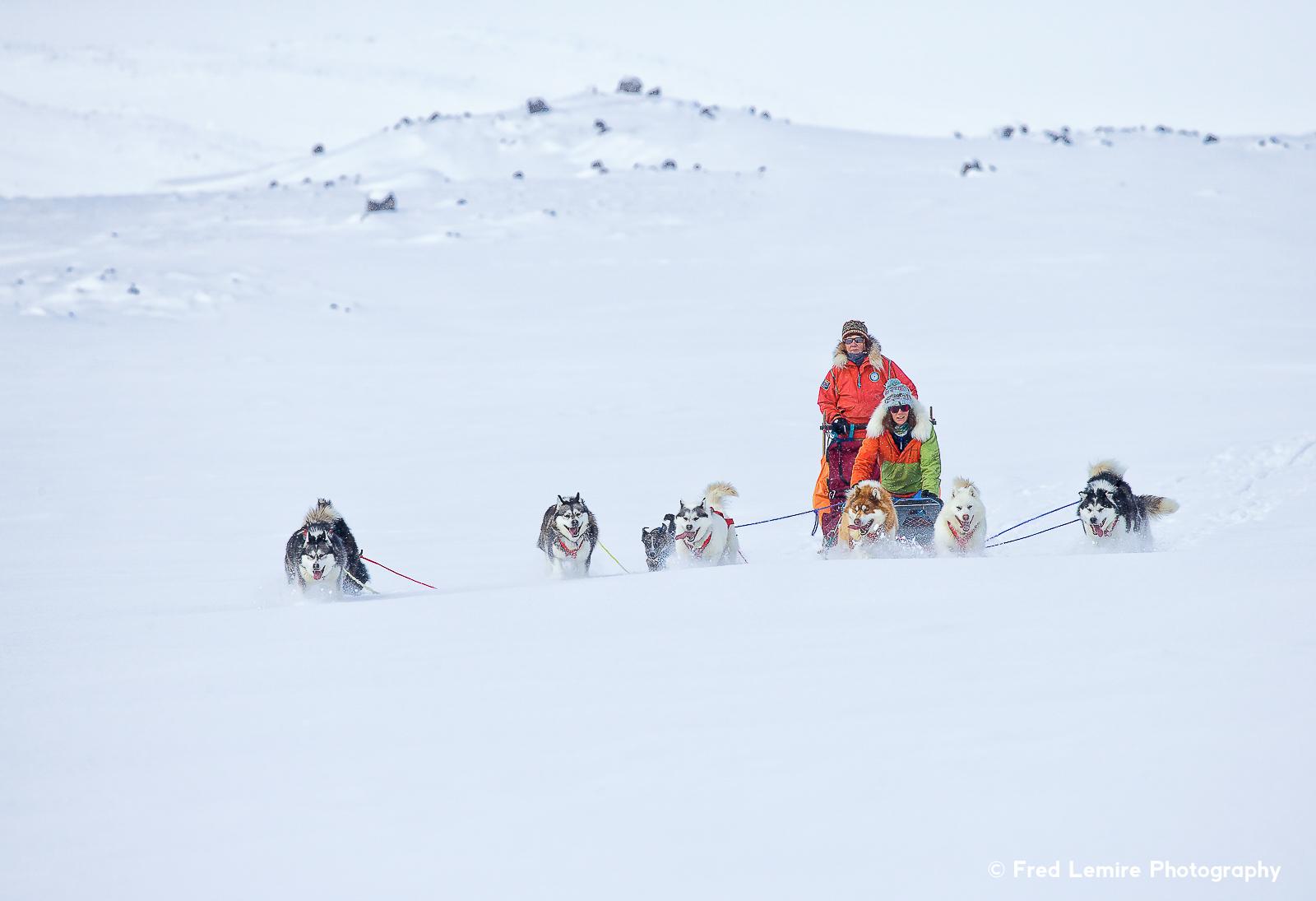 Dog team 13
