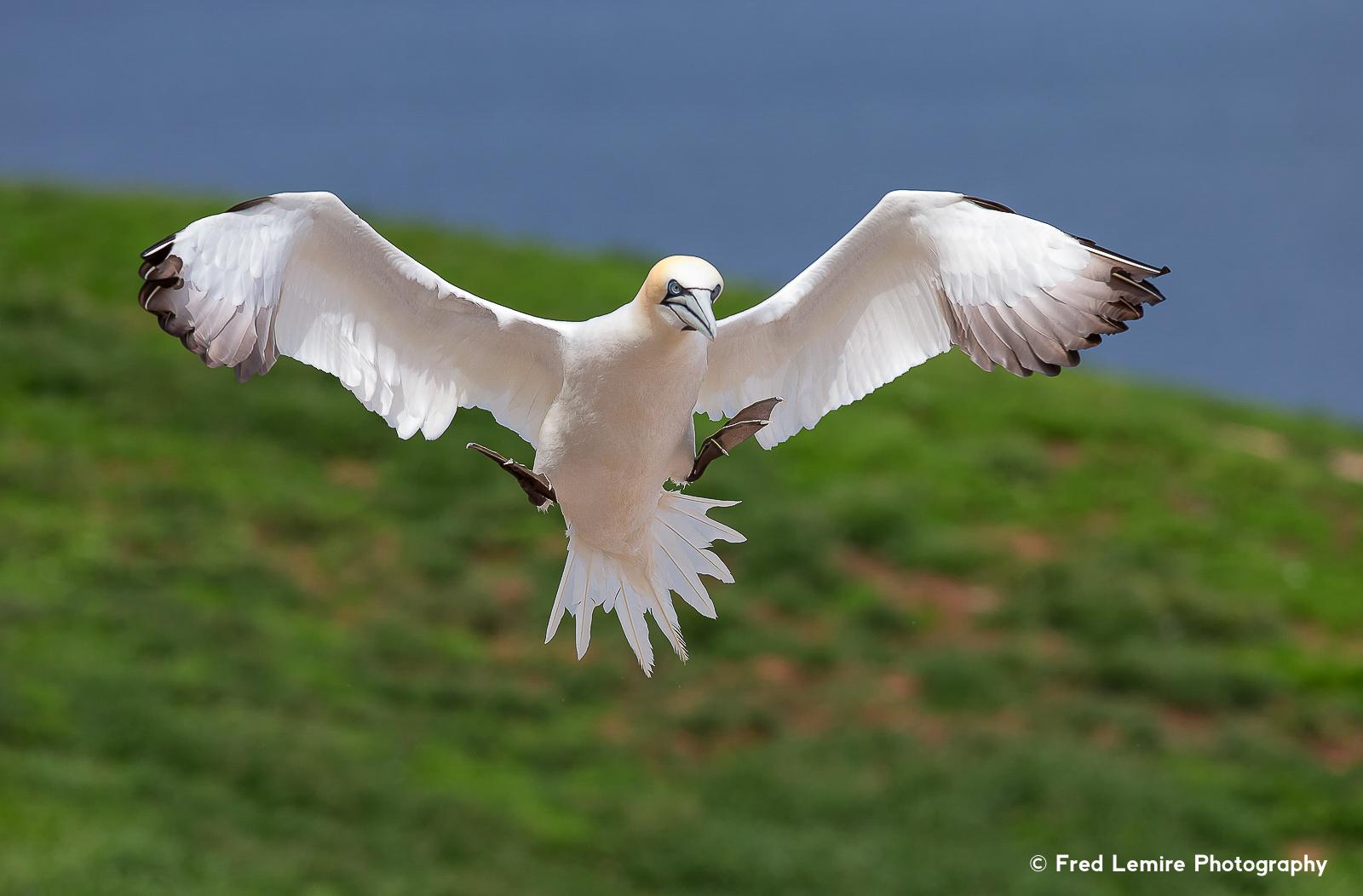 Sea birds 3